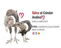 Salva al cóndor andino