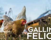 Proyecto Producción de Huevos Agroecológico de Gallinas Felices