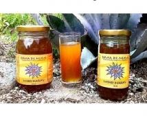 CICARDIANO
