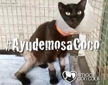 #AyudemosaCoco