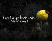 Una flor que brota sola
